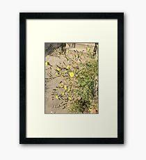 Flower Direction Sway Framed Print