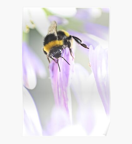Bee-ing watchful Poster