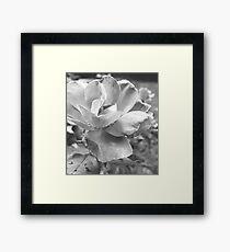 A Black & White Beauty Framed Print