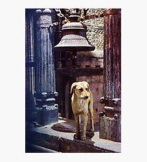 Pavlov Photographic Print