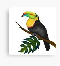 Tropical Bird Art Tucan  Canvas Print