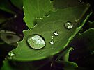 A Drop Of Rain by lindsycarranza