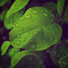 Green Rain by lindsycarranza