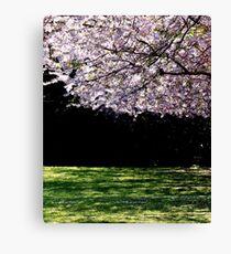 Cherry blossom by Laila Cichos Canvas Print
