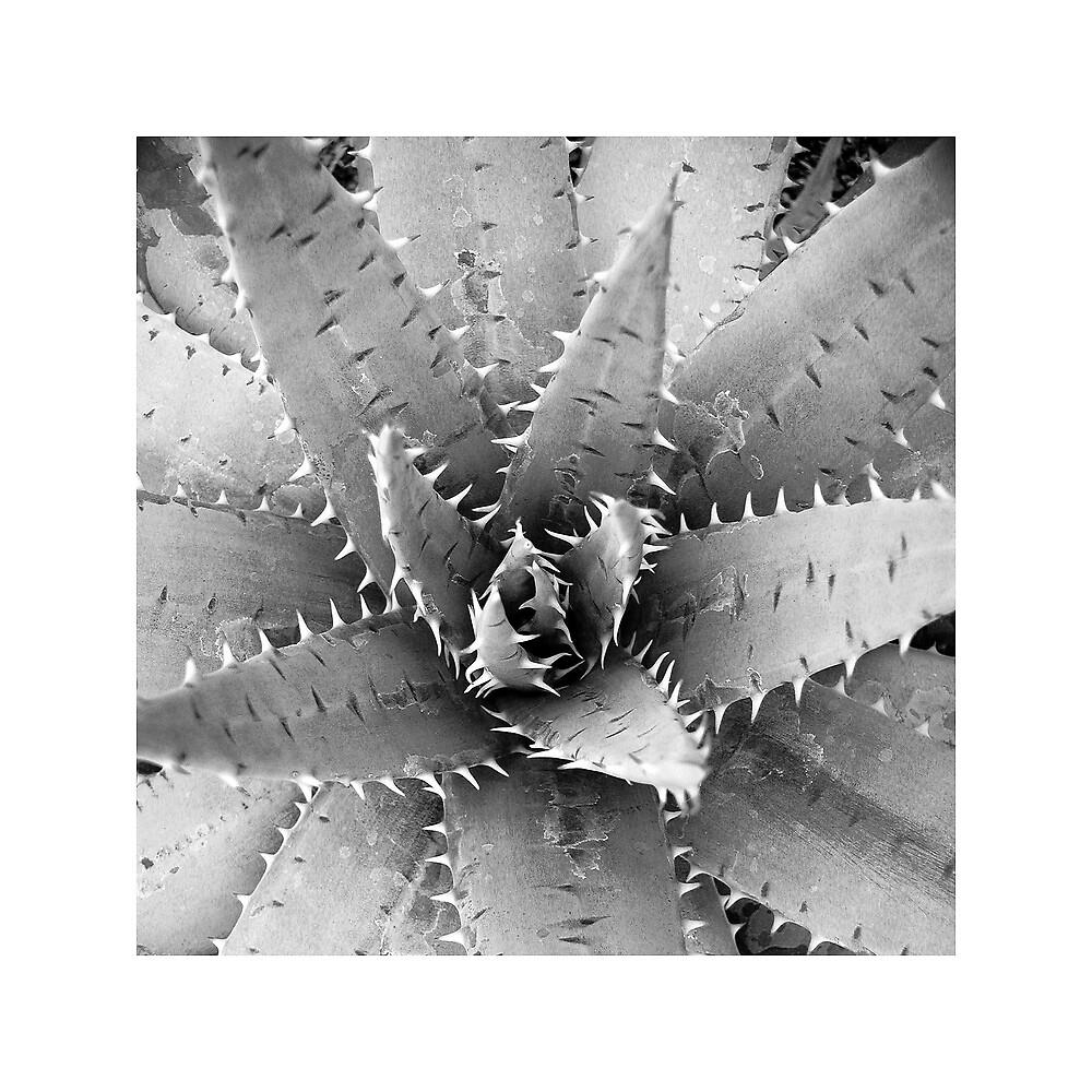 Aloe by Mark Routt