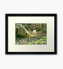 The Pinguin... Framed Print