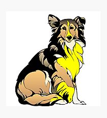 Beautiful collie dog is your companion Photographic Print