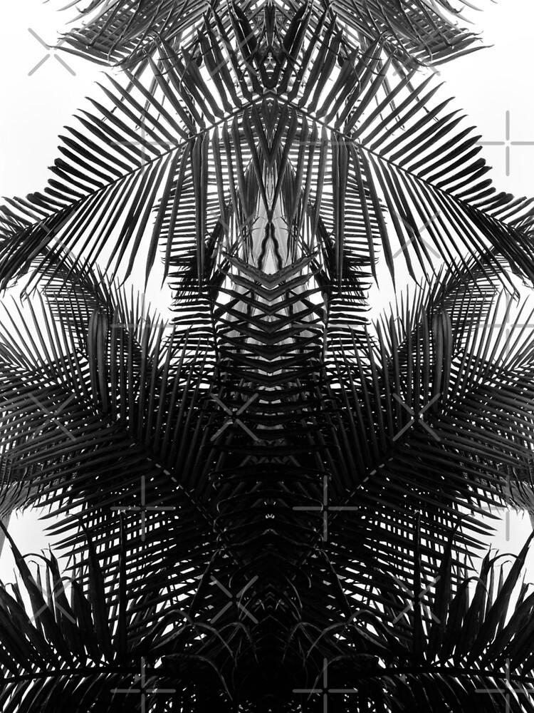Black and white fern by haroulita