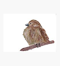 Hand drawn watercolor sparrow Photographic Print