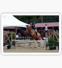 Equitation horse Sticker