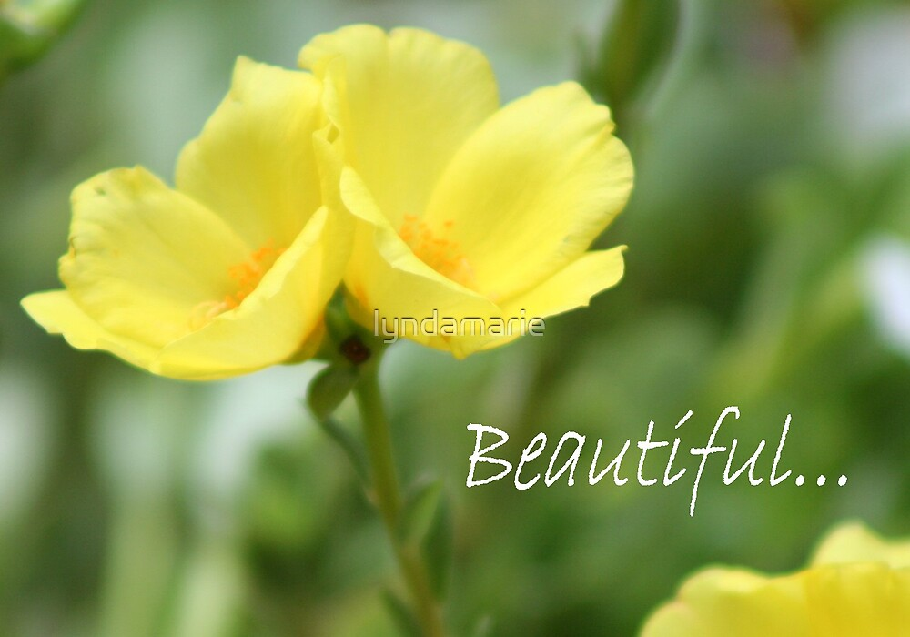 Beautiful... by lyndamarie