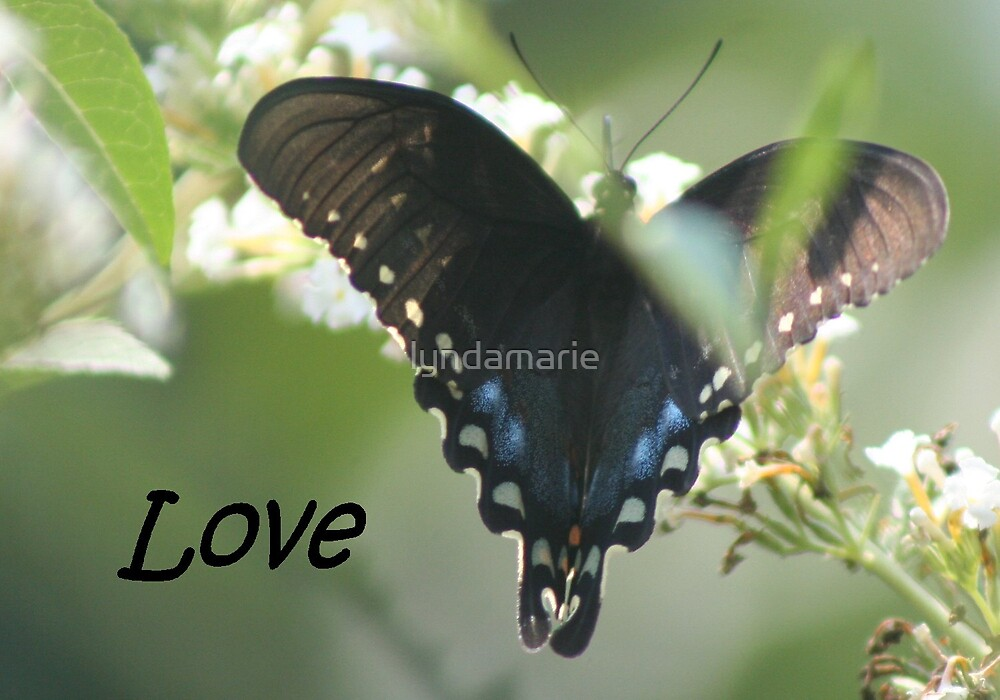 Love... by lyndamarie