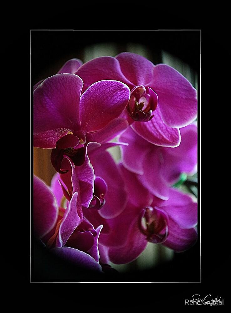 My Bestie's Orchids by Rene Crystal