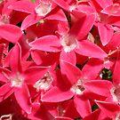 Pink by Rebekah  McLeod