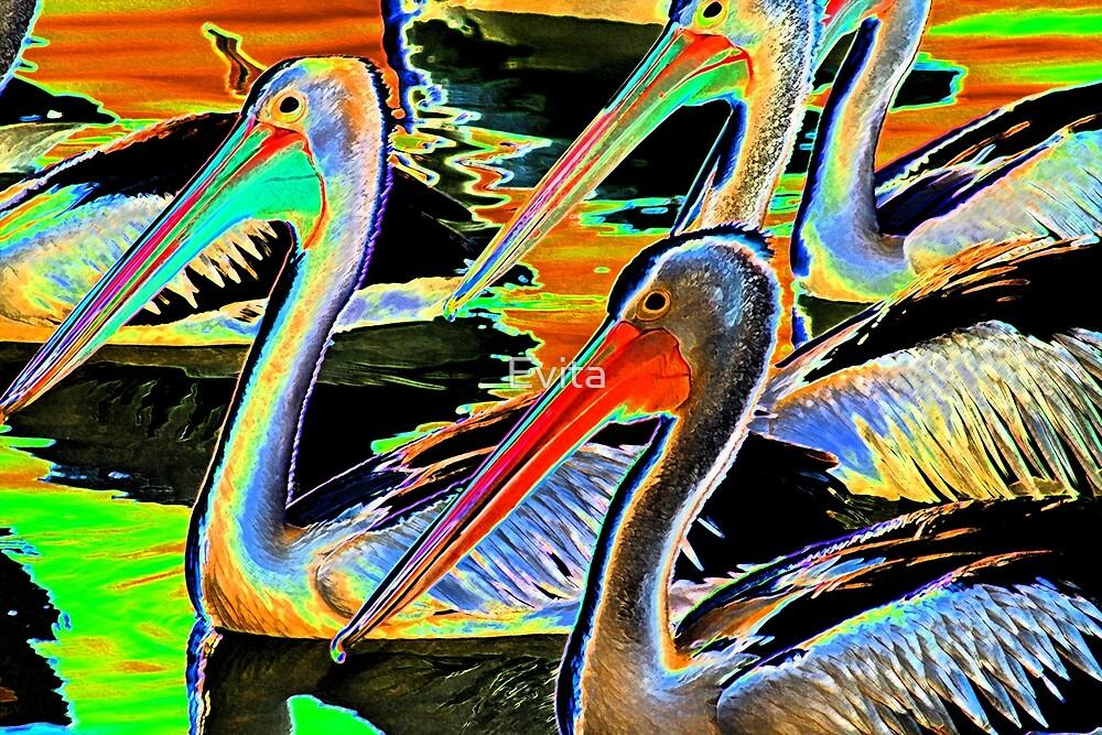 Glowing Pelicans by Evita