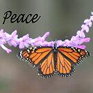 Peace... by lyndamarie