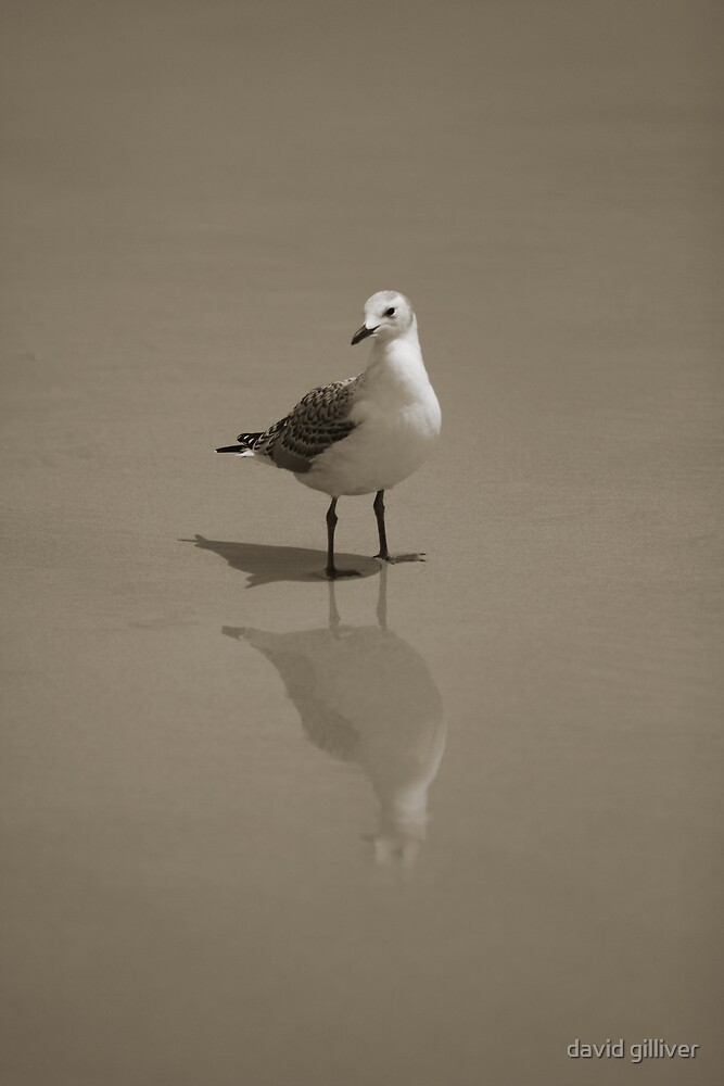 seagull by david gilliver