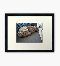 Tortie Framed Print