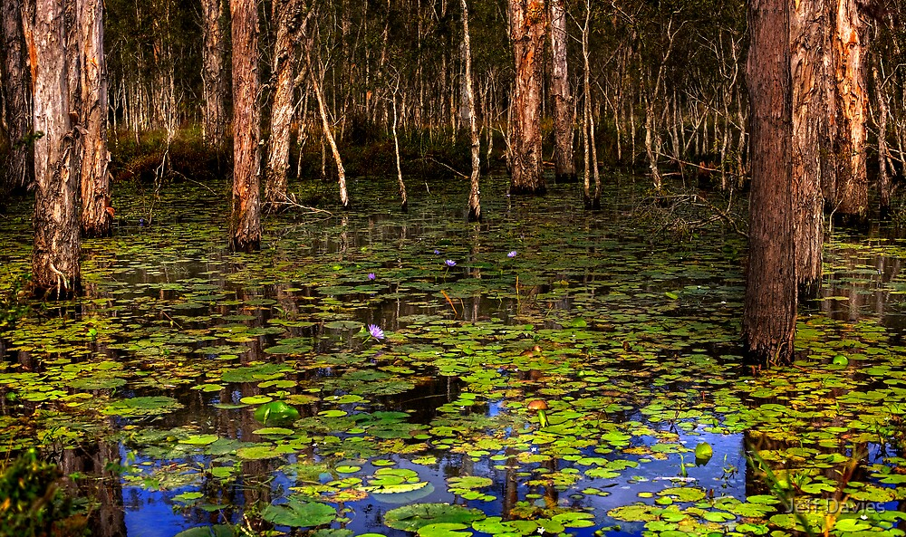 The swamp by Jeff Davies