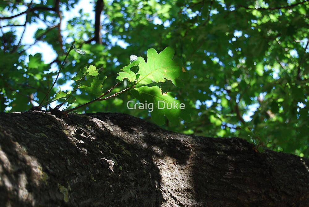 Oak Leaf by Craig Duke