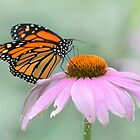 Monarch butterfly by Laurie Minor