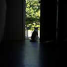 Feline Sentry by Elisha Rhea