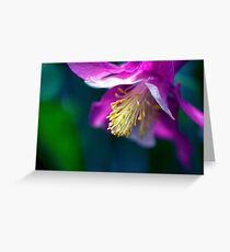 Pink and White Columbine Flower Greeting Card
