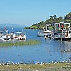 Pleasure Crafts on Lago Villarrica by Graeme  Hyde