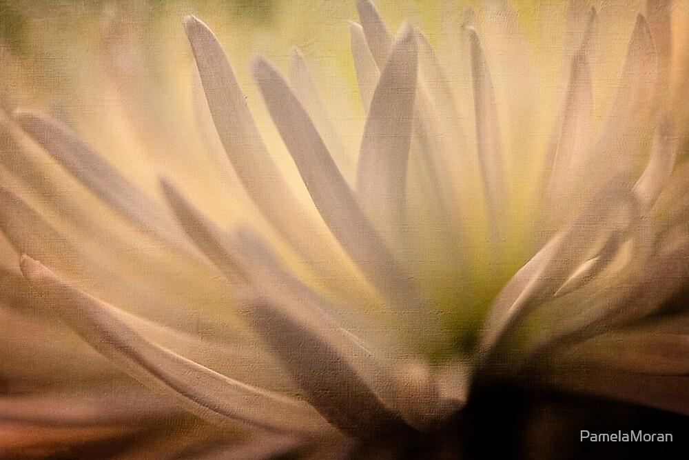 Chrysanthemum by PamelaMoran