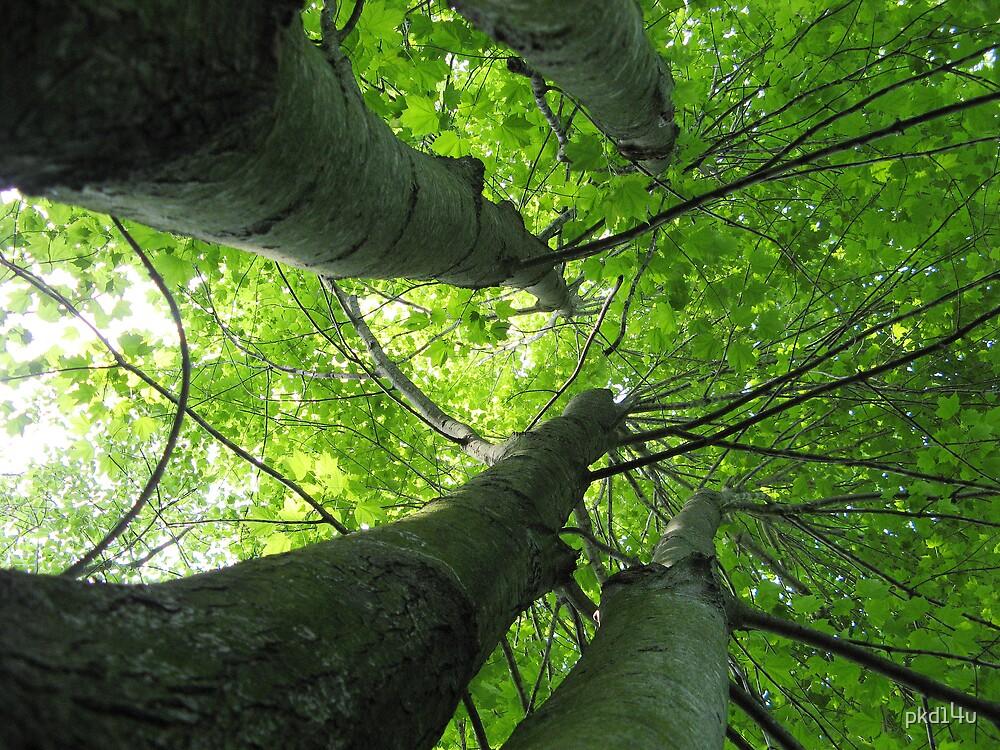 Four Trees by pkd14u