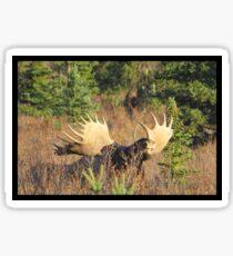 Sniffin' Moose Sticker