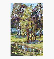 Rawdon Island - plein air Photographic Print