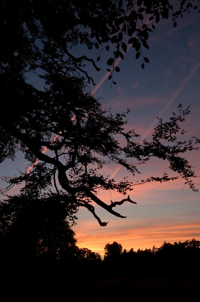 Dusk through the trees by Charles Howarth