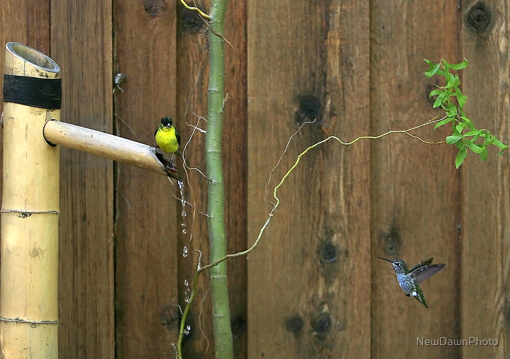 Gold Finch & Hummer by NewDawnPhoto