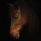 Gentle by Dawnsky2