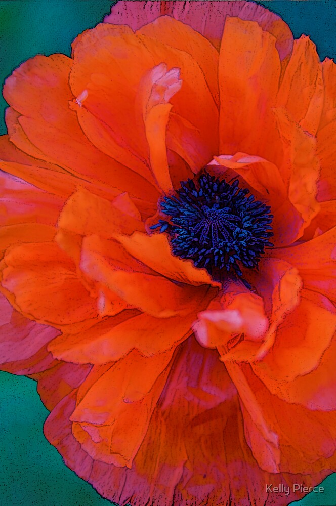 The Poppy by Kelly Pierce