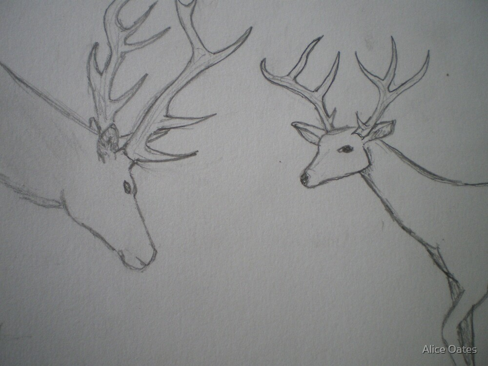 Stags by Alice Oates