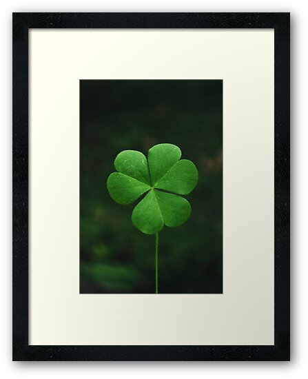 Clover 1 by Pandrot