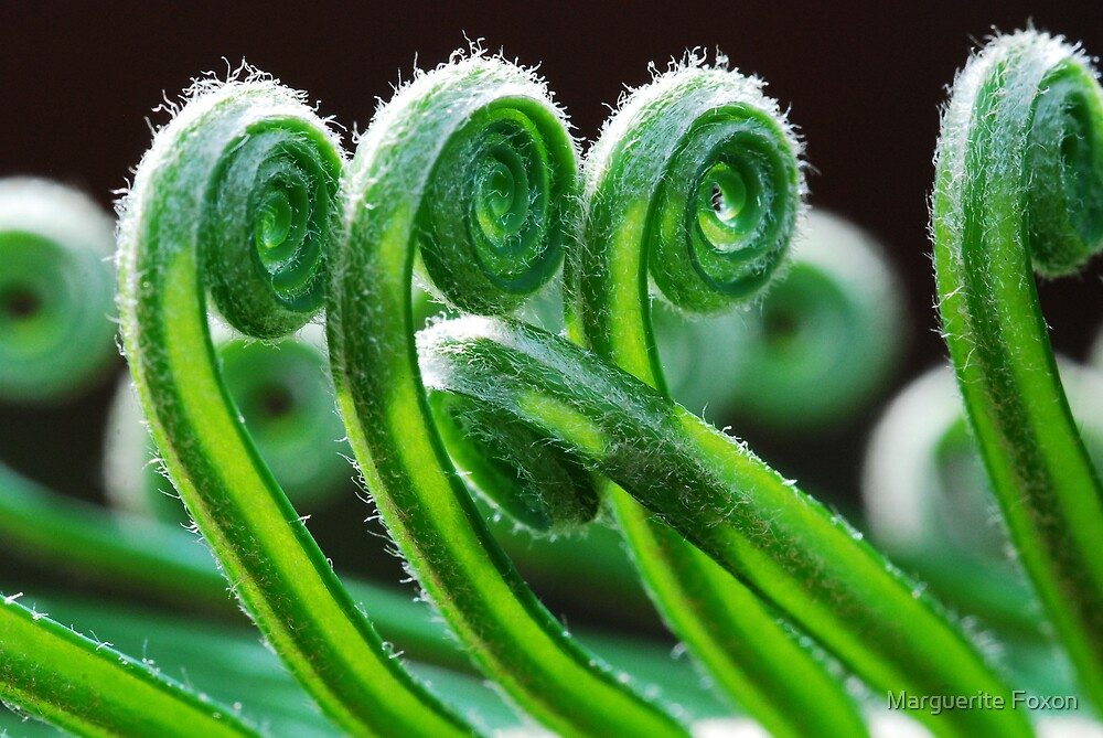 Dancing Fronds by Marguerite Foxon