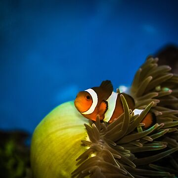 Nemo by Ismart