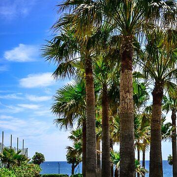 palms by Ismart