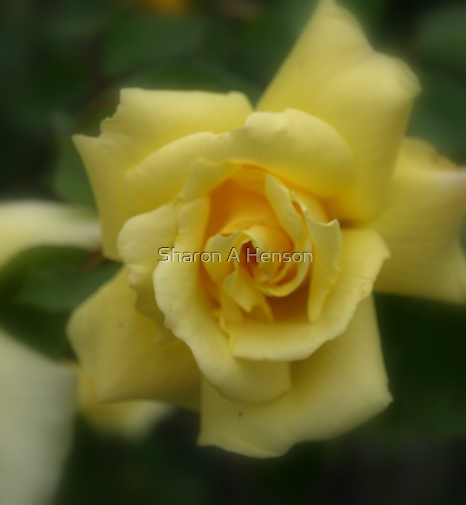 YELLOW BEAUTY by Sharon A. Henson