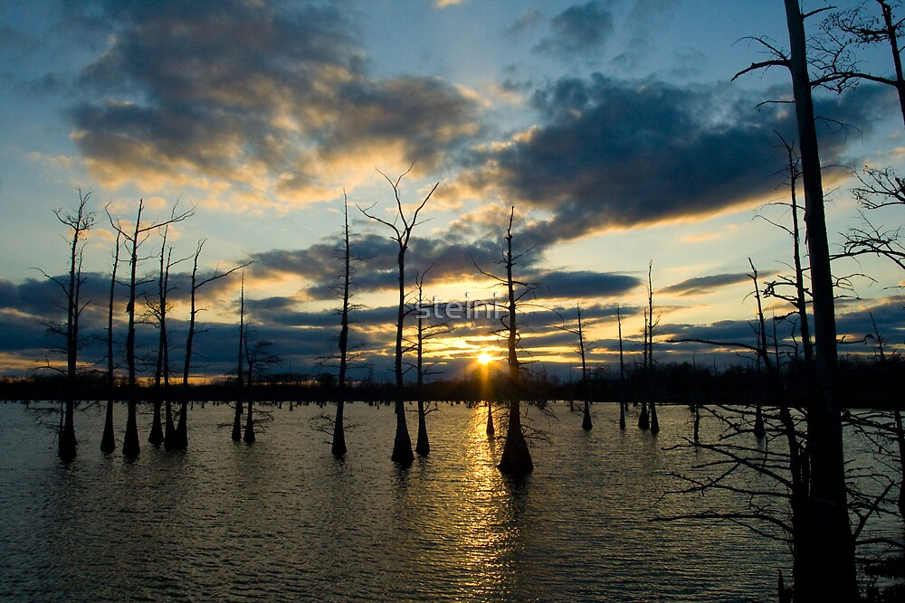 Cypress Silhouettes by steini