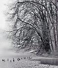 Foggy Lake by JHRphotoART