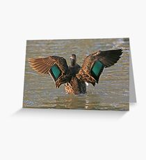 Pacific Black Duck (59) Greeting Card