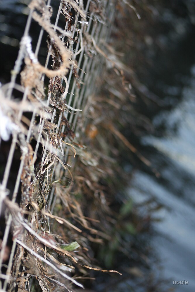 sea weed in nets by nooie
