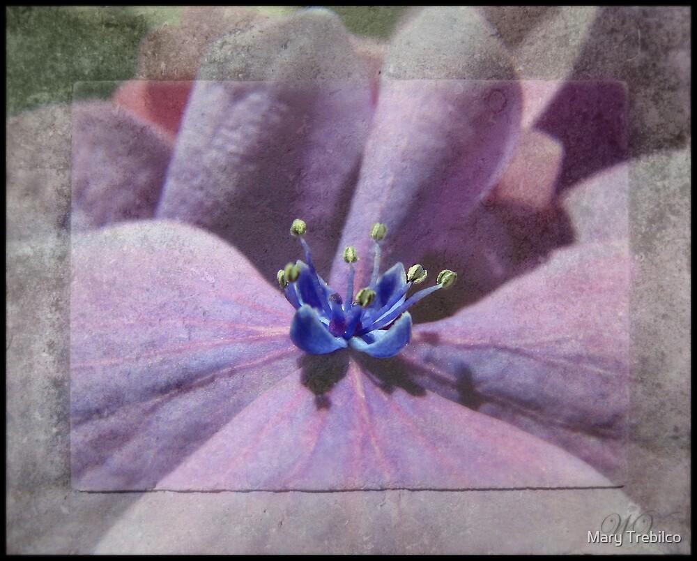 Simple hydrangea... by Mary Trebilco