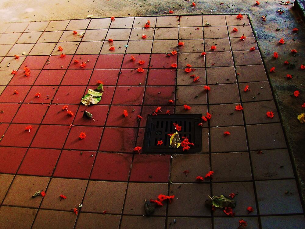 Fallen Flowers by Barbara Morrison