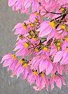 Vintage pink by Rosalie Dale