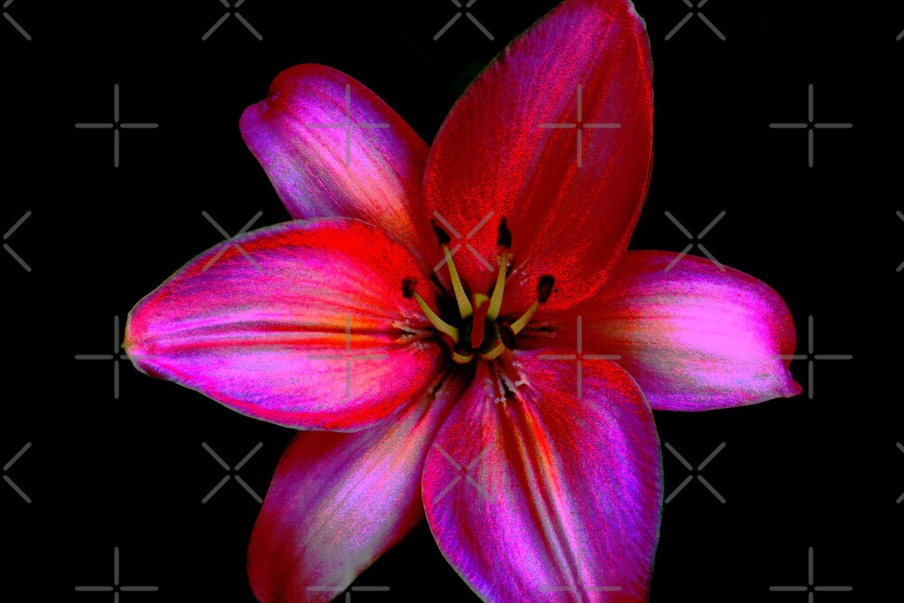 Petal Power by connie campbell
